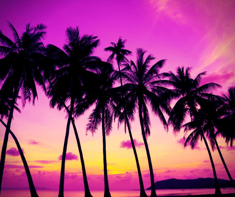 Jam Run Palm Trees